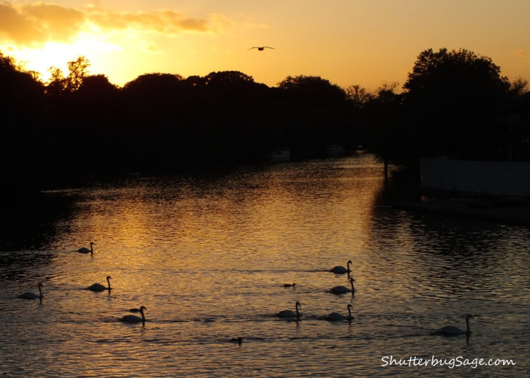 Sunset Over Thames in Windsor