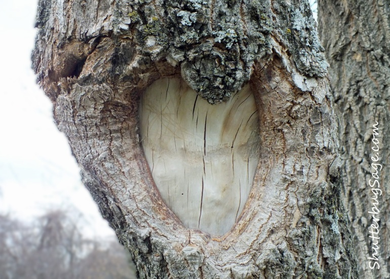 Heart Tree_edited-1