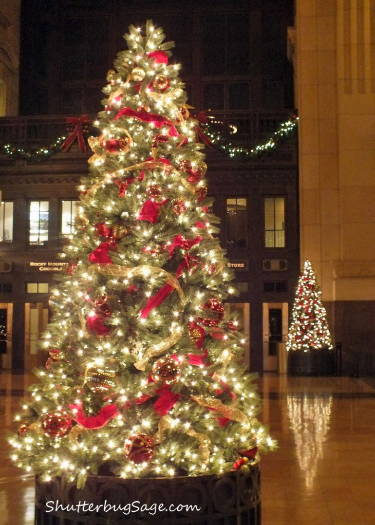 Tree at Union Station_edited-1