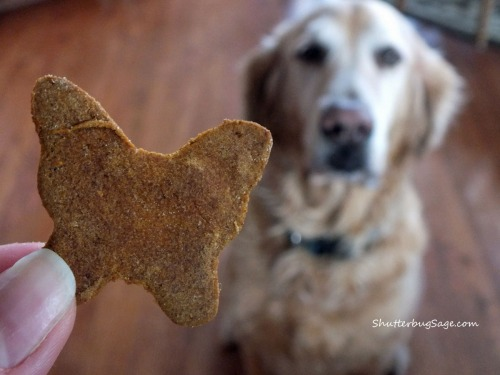 Dog Biscuits 3_edited-1