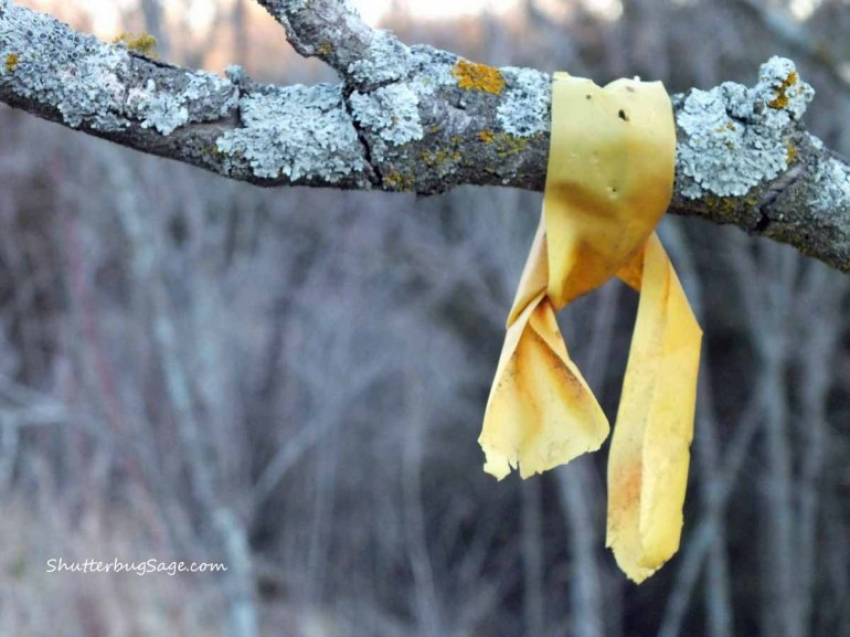 Yellow Ribbon_edited-1