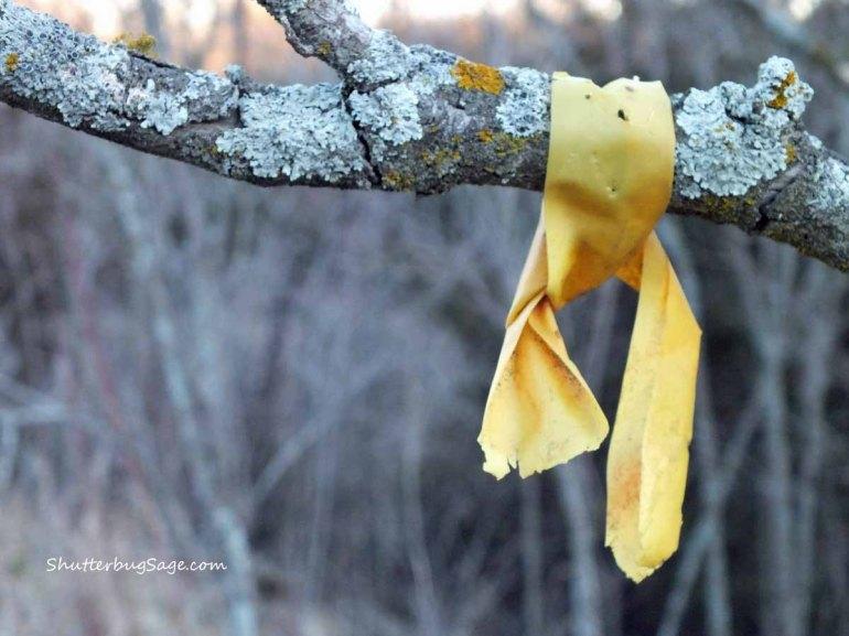 Yellow Ribbon_edited-1