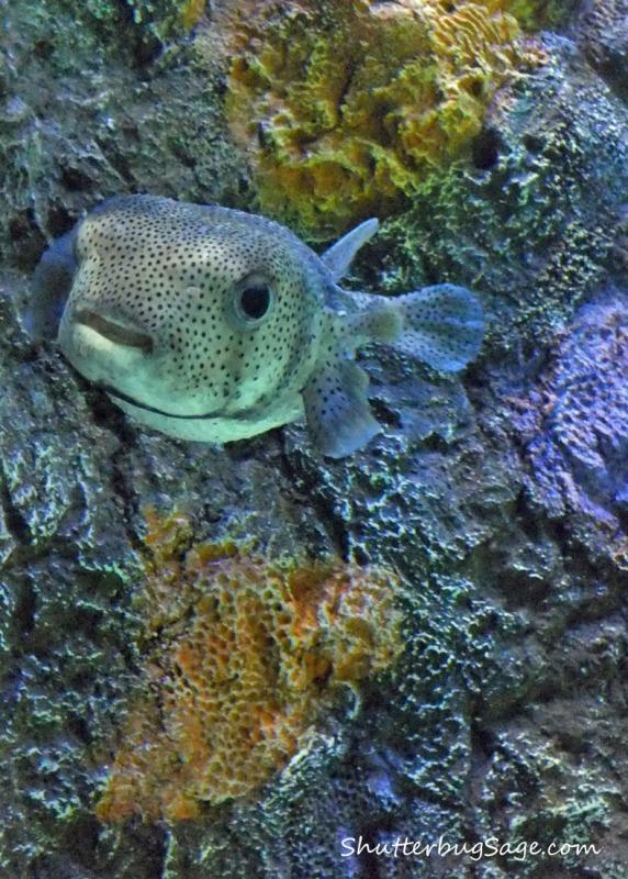 Aquarium_edited-1