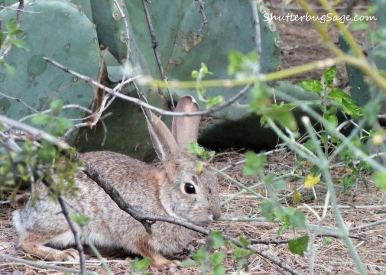 Bunny_edited-1