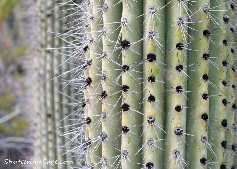 Cacti 2_edited-1