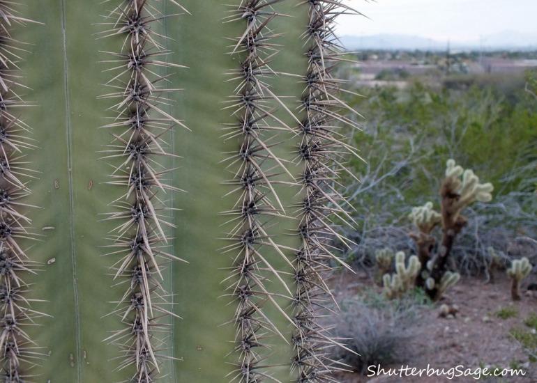 Cacti 3_edited-1