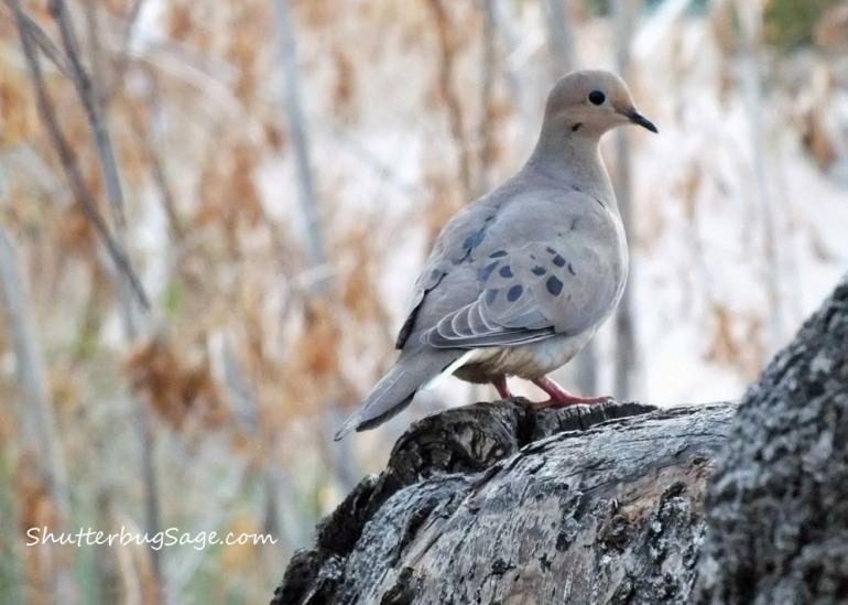 Dove 2_edited-1