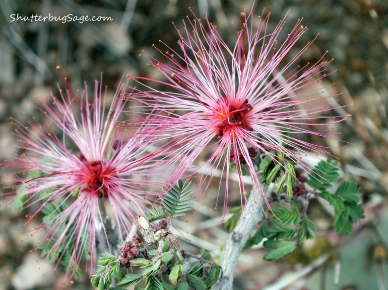 Fairy Duster 1_edited-1