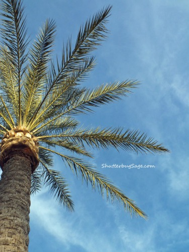 Palm Tree_edited-1