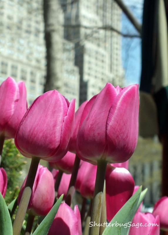 Tulips in Bryant Park_edited-1