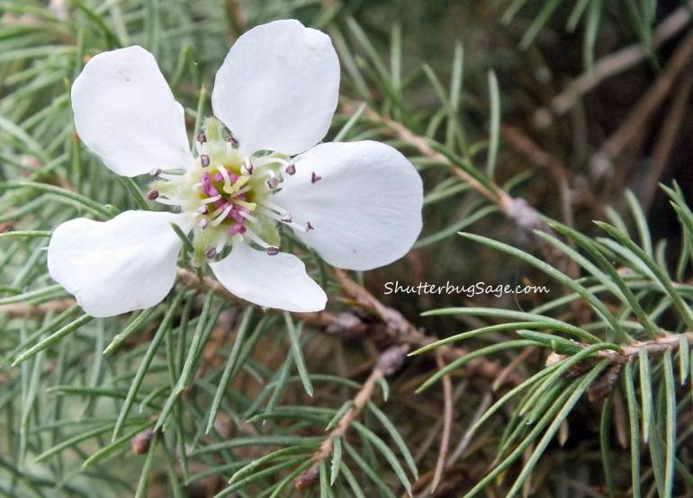 White Flower_edited-1