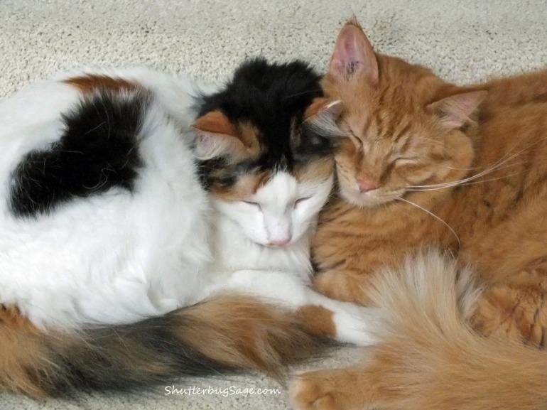 Kitties_edited-1