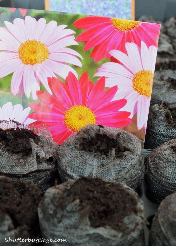 Planting Seeds_edited-1