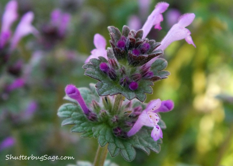 Purple Weed_edited-final