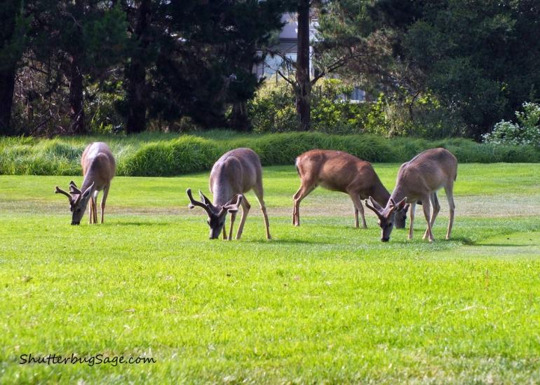Deer 3_edited-1