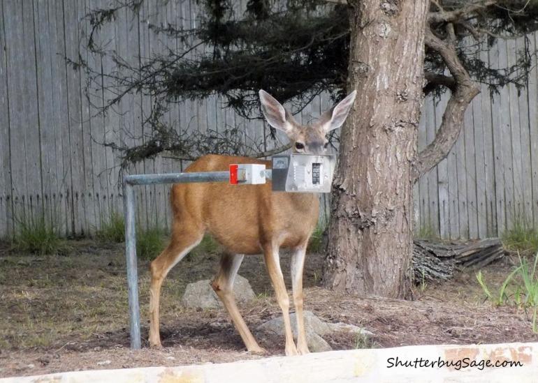 Deer 4_edited-1
