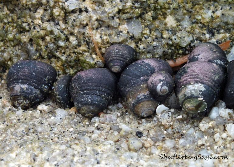 Pretty Shells All in a Row_edited-1