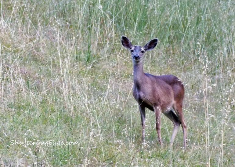 Deer 5_edited-1