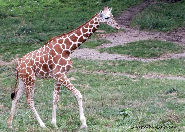 Baby Giraffe_edited-1