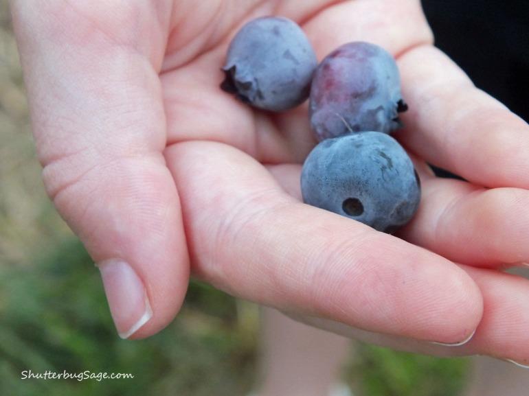 Blueberries_edited-1