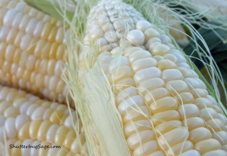 Corn_edited-1