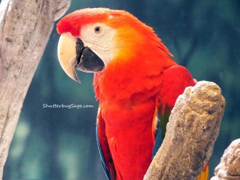Macaw_edited-1