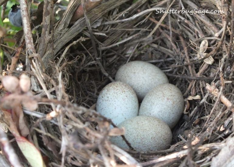 Nest 1_edited-1