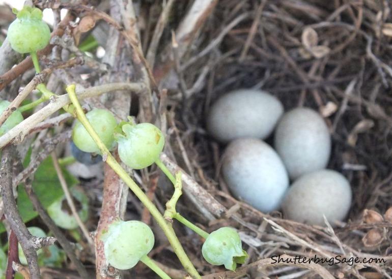 Nest 2_edited-1