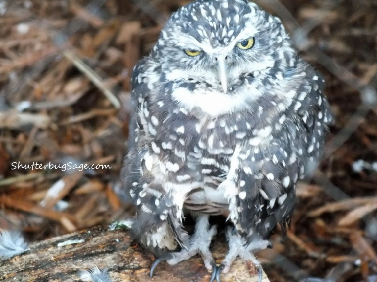 Owl_edited-1