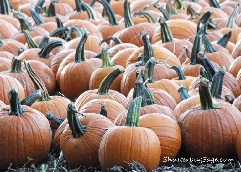 Pumpkins_edited-1
