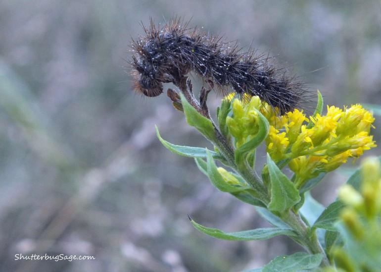 Caterpillar_edited-1