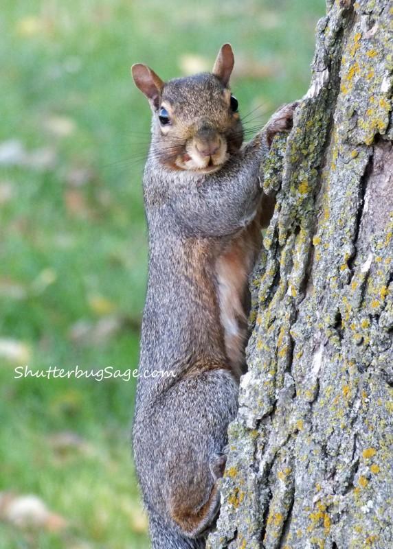 Squirrel_edited-1