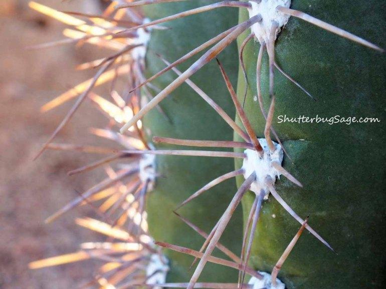 Cactus 2_edited-1