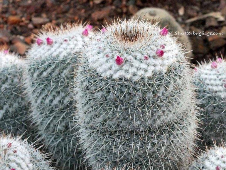 Cactus 4_edited-1