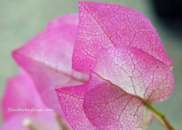 Pink Flower_edited-1