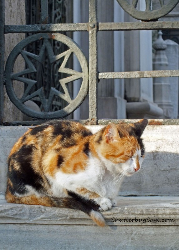 Cat in Istanbul copy