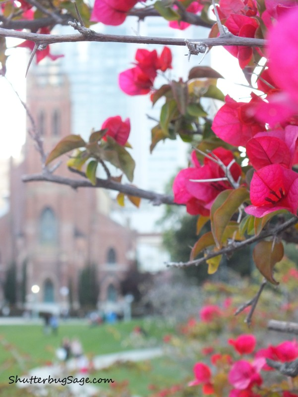 Pink Flowers and St Patricks copy