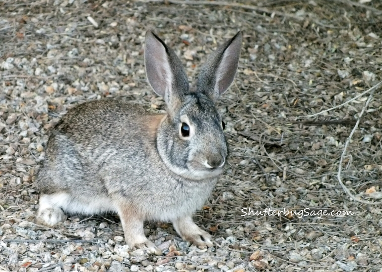 Bunny at Riparian Preserve_edited-1