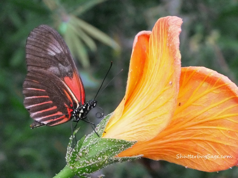 Butterfly on a Flower 2_edited-1