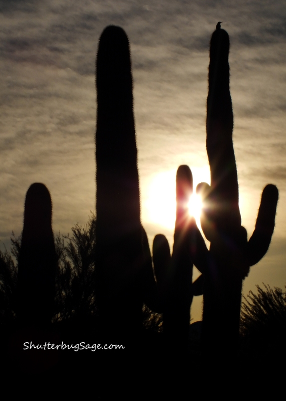 Sonoran Desert Sunset_edited-1