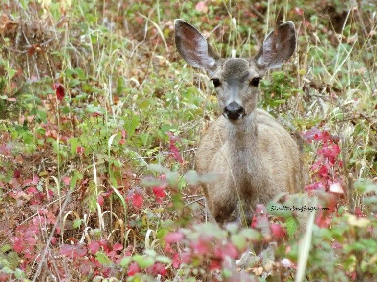 Deer 1_edited-1
