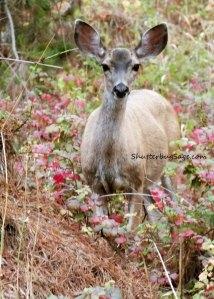 Deer 2_edited-1