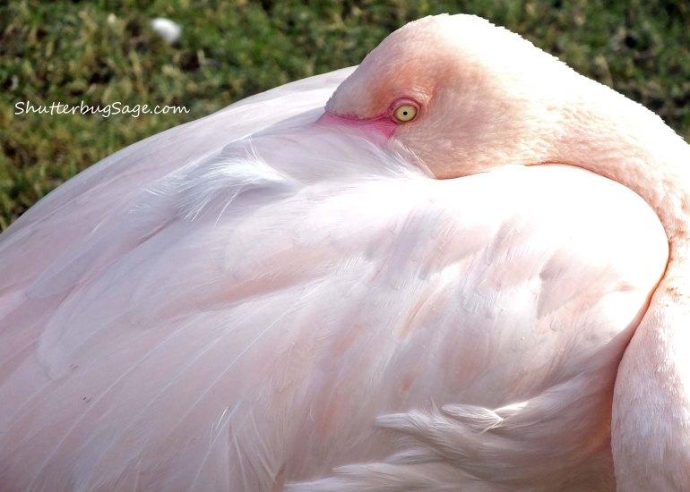 Flamingo 2_edited-1