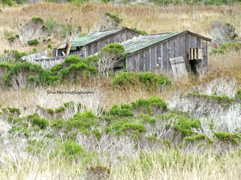 Old Building at Point Lobos_edited-1