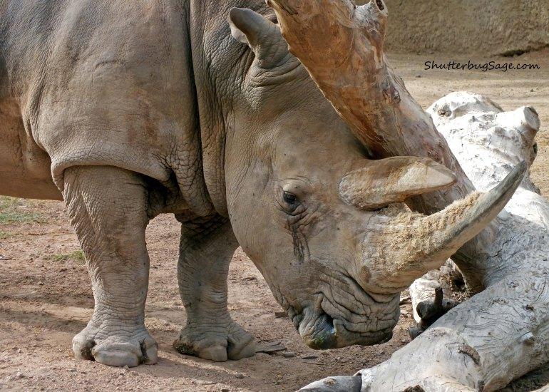 Rhino_edited-1