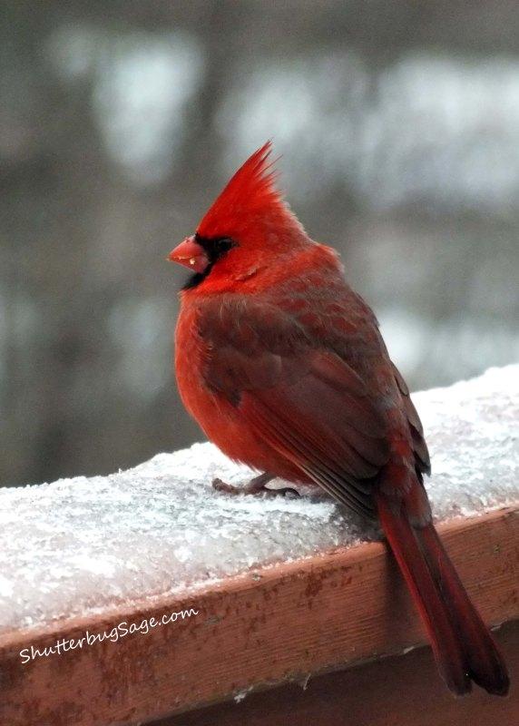Cardinal 2_edited-1