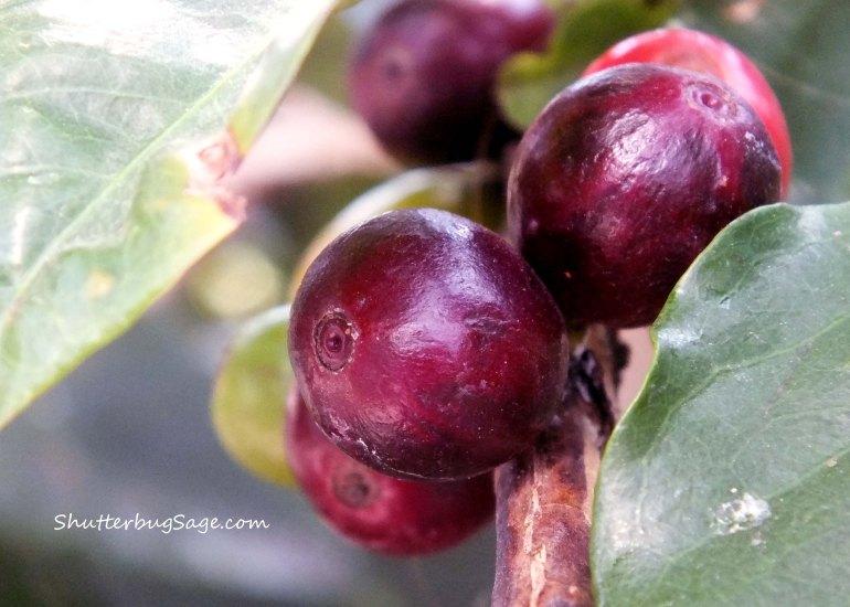 Coffee Beans_edited-1
