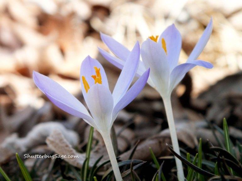 Flowers 1_edited-1