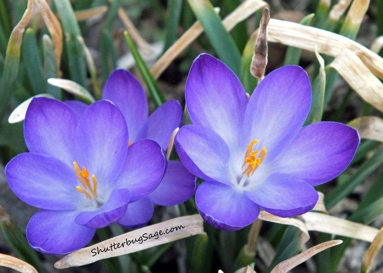 Flowers 2_edited-1