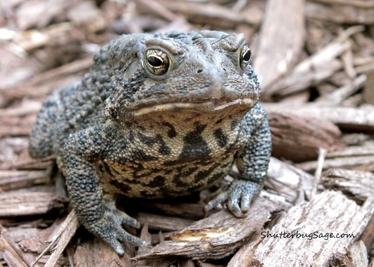 Frog_edited-1